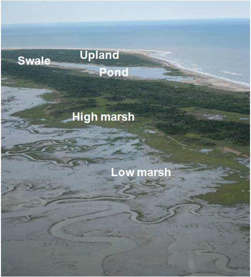 Aerial photo showing a range of land cover types on Hog Island
