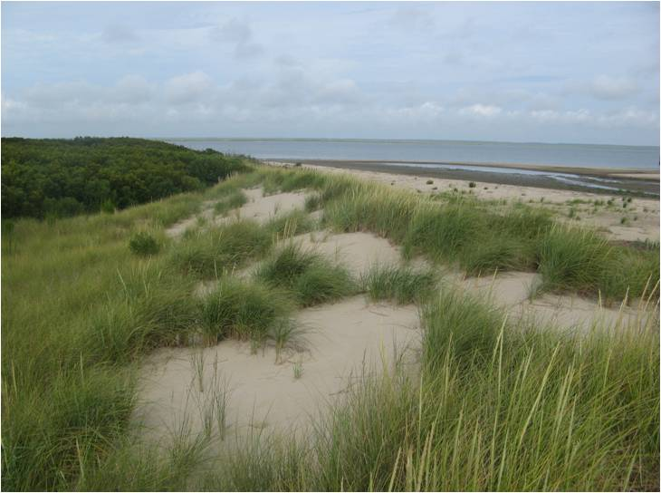Grassy dune on a barrier island in the VCR LTER